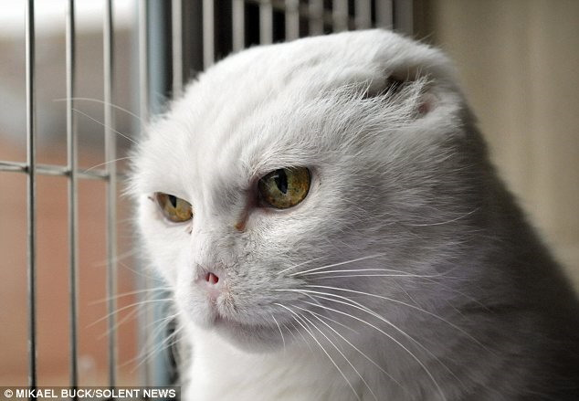 Voldemort cat gets adopted by a woman who does not give a shit about Harry Potter.