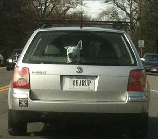 1earup license plate