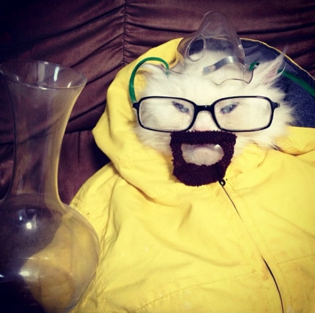 Cat dressed as Walter White