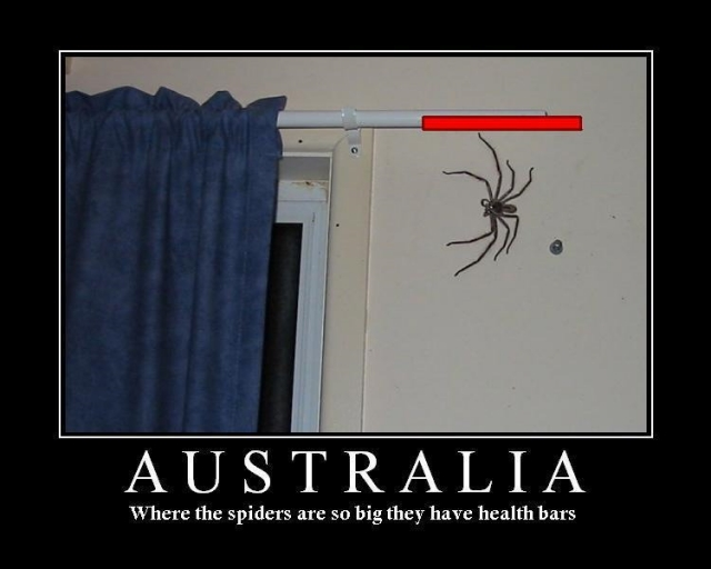 Motivational Exchange! - Page 2 Small_australian%20spiders