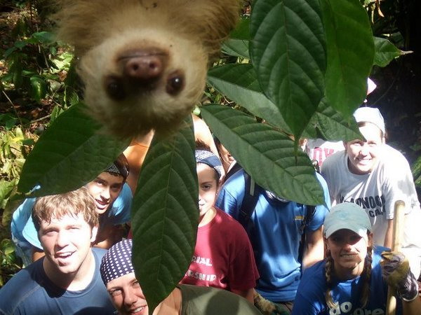 Photobombing sloth