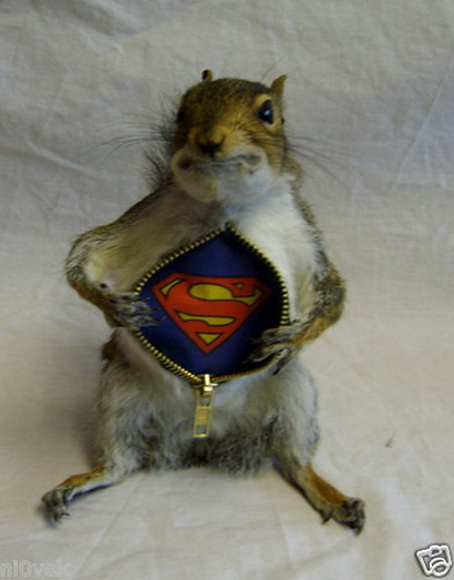 Taxidermy Superman squirrel