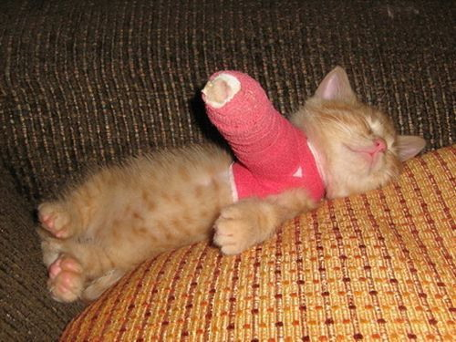 Cat Leg Broken http://www.blameitonthevoices.com/2009/04/broken-leg-kitten.html