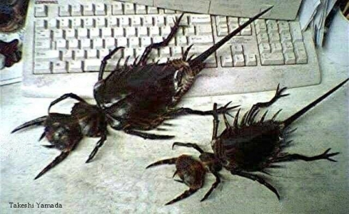 Image Result For Bed Bugs Matinga