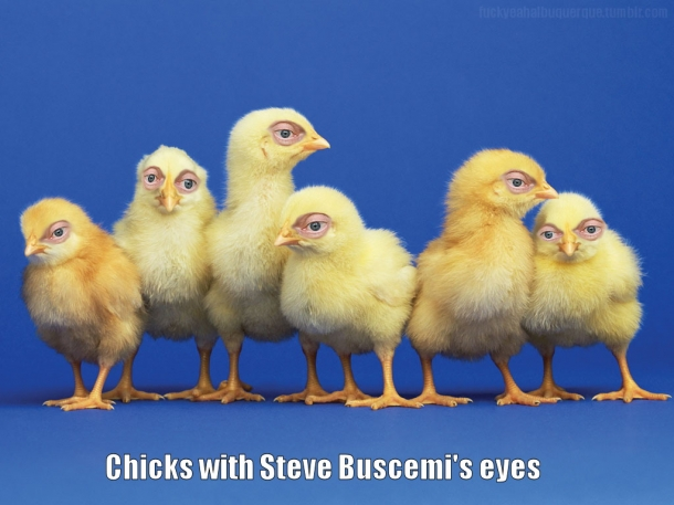 http://pics.blameitonthevoices.com/042011/small_chicks%20with%20steve%20buscemi%20eyes.jpg