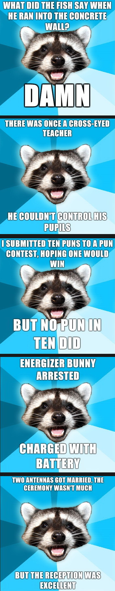 Lame Pun Raccoon