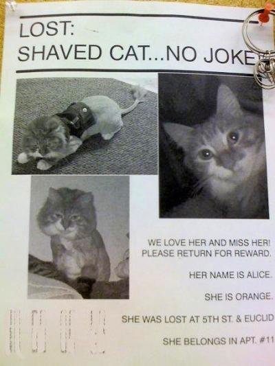 Someone lost their shaved pussy. Friday, June 12, 2009