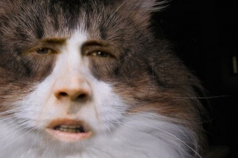 Online Car Insurance Quotes >> Single-serving site: Nic Cage CatsSmital Online