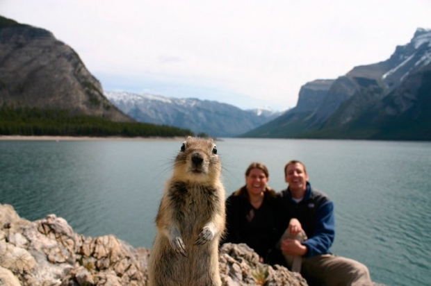 Squirrel photo bombing