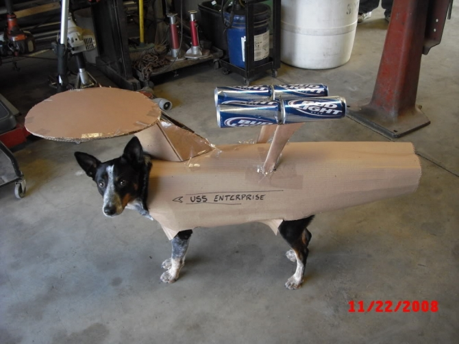 HAlloween Enterprise dog costume