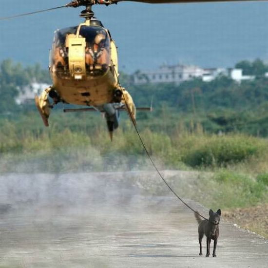 Helicopter dog walking