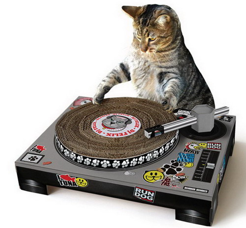 Cat playing with turntable deck