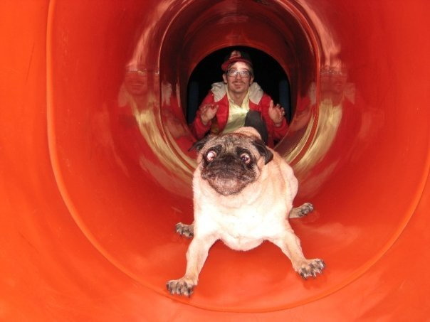 Funny face of the day: pug on a slide