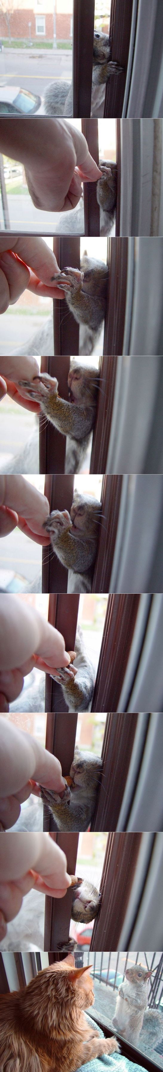 Cute squirrel at the window